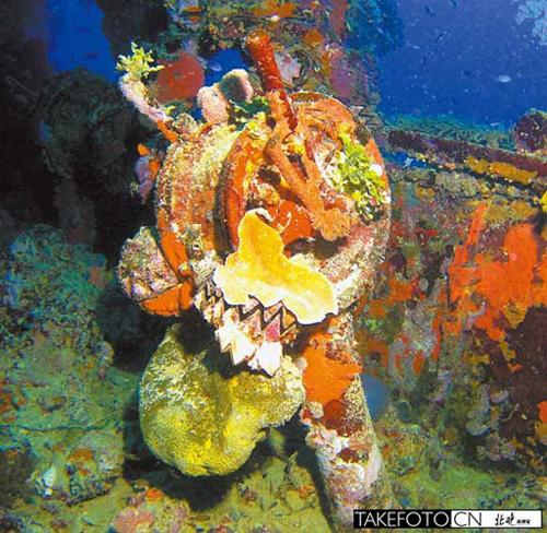 壁纸 海底 海底世界 海洋馆 水族馆 500_488