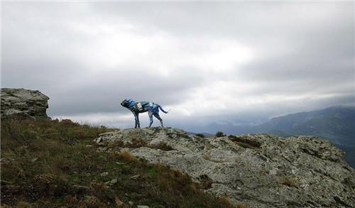 艺术家用海洋垃圾制作动物雕塑-张雄艺术网
