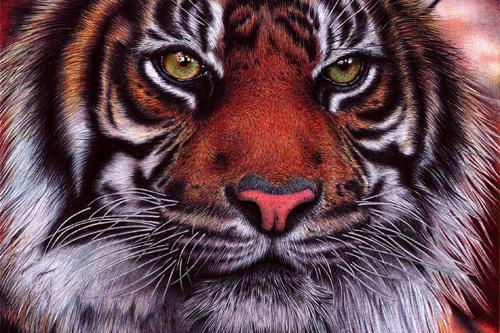 老虎画画图片步骤