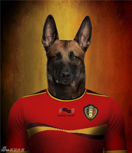 """比利时野生动物摄影师作品:""""了不起的世界杯小狗"""""""