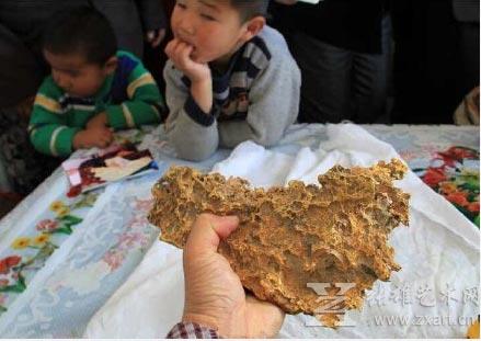 新疆牧民捡到狗头金